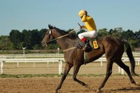 Nevada Casino Owner Fixes California Horse Races