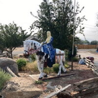 Quick Fact — Lady Godiva Trots to New Residence